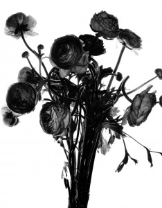 Flowers (Untitled), 199