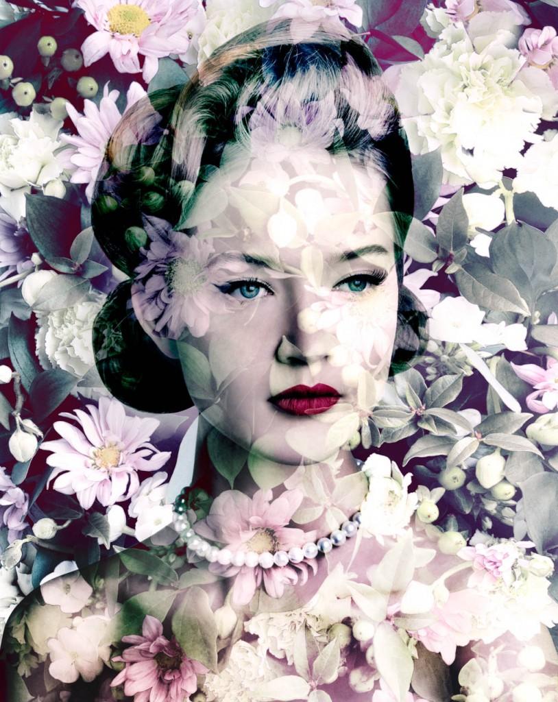 Painted Daisy (Carmine Blush Chrysanths)